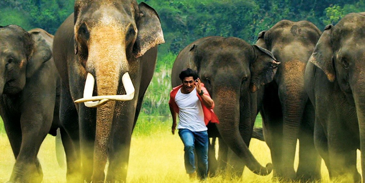 Junglee Review
